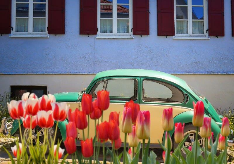 Car and Flowers